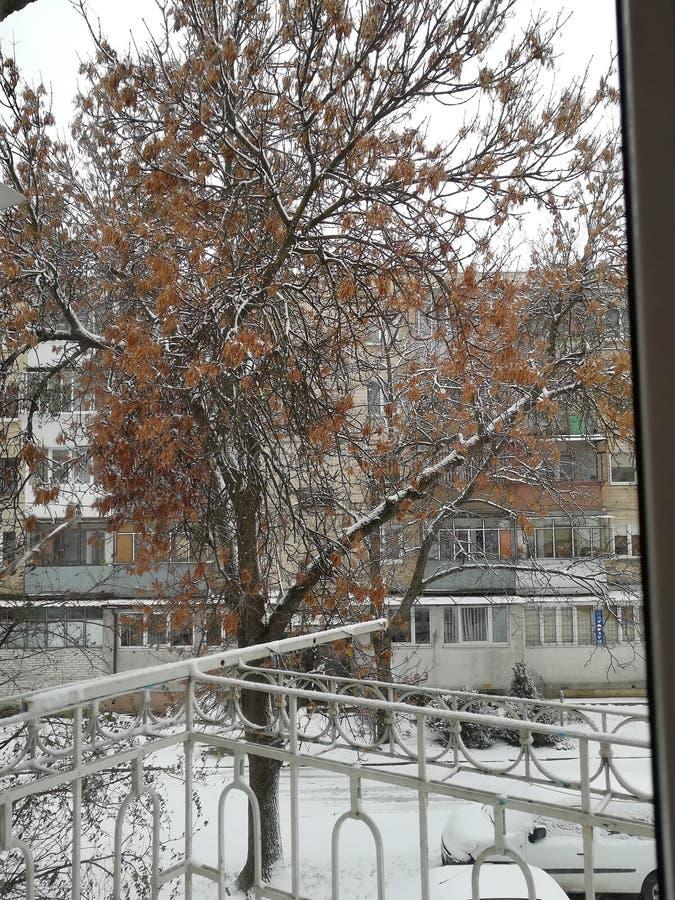 Winter im Yard stockbilder