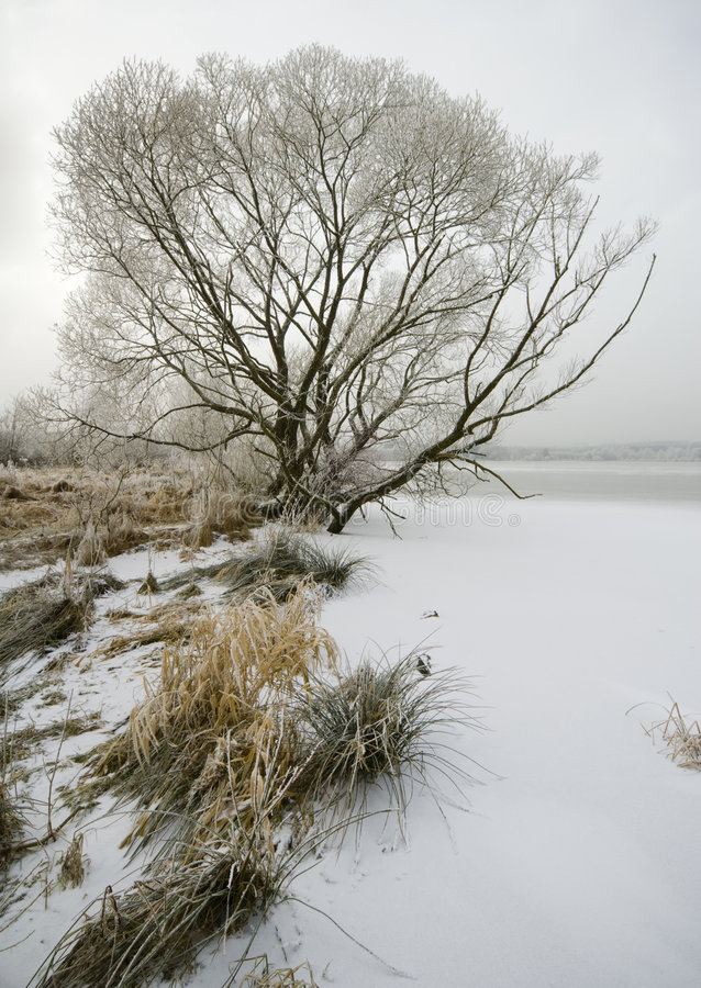 Winter impressions Lake & Trees Collection royalty free stock photos