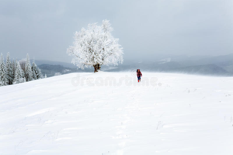 Winter inclement snowy landscape. Winter inclement dull day mountain landscape with snowy trees and woman tourist on hill stock photos