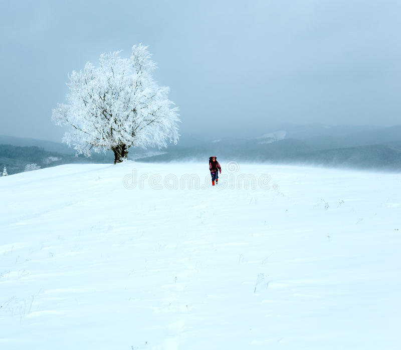 Winter inclement snowy landscape. Winter inclement dull day mountain landscape with snowy trees and woman tourist on hill royalty free stock images
