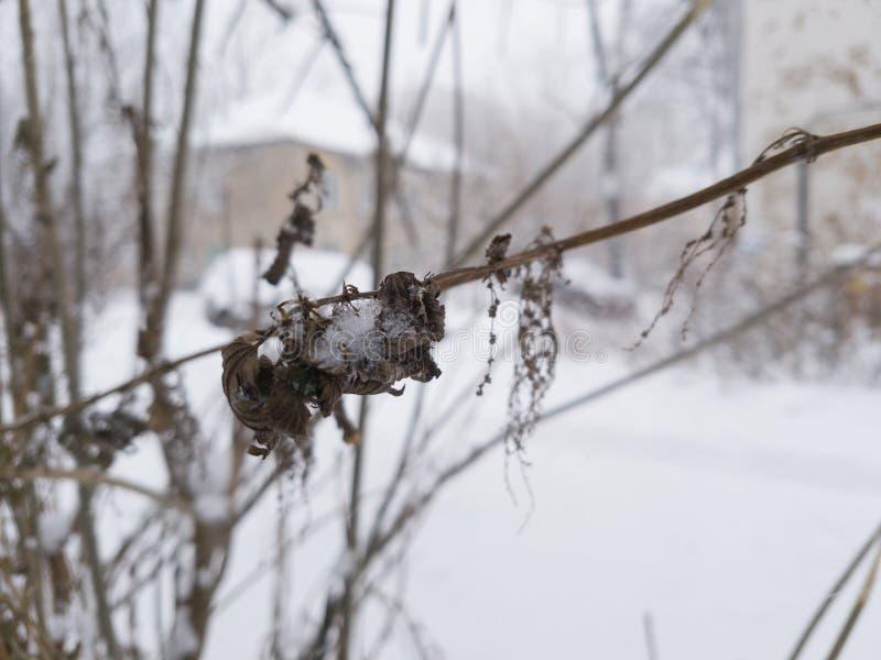 Winter januar yard nave lizenzfreies stockbild