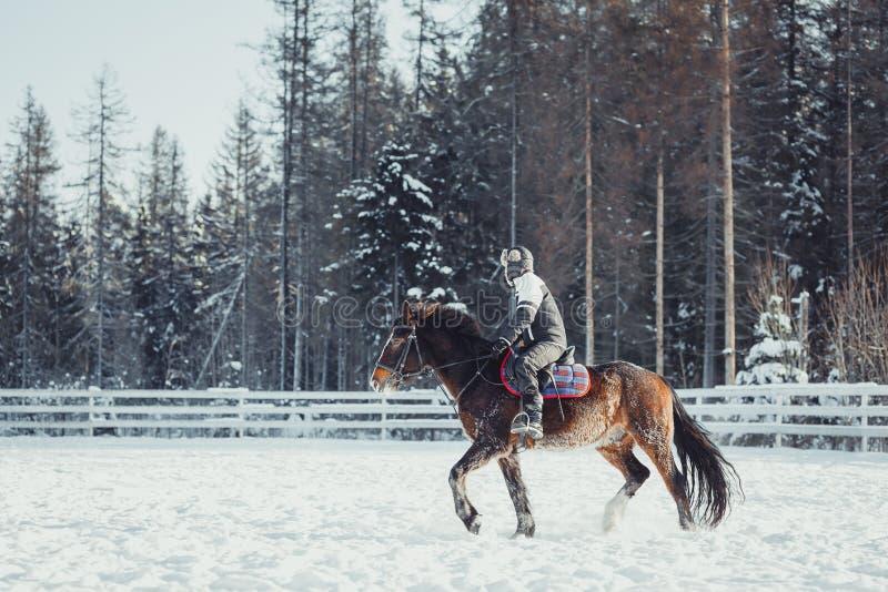 Winter jump horse ride jumping. Winter teenage girl jump horse ride jumping royalty free stock images