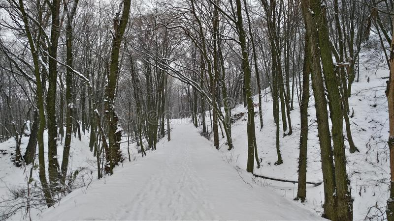 Winter in Kiew stockbild