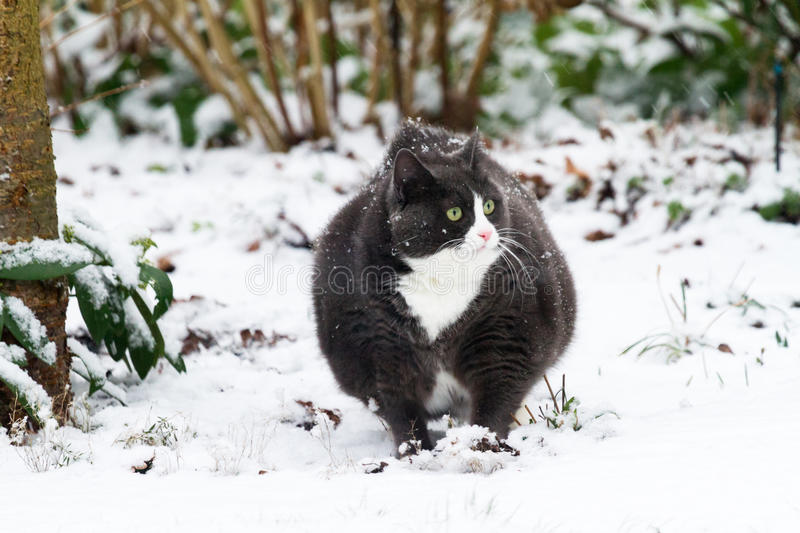 Download Winter kitty stock image. Image of playful, garden, kitty - 30489019