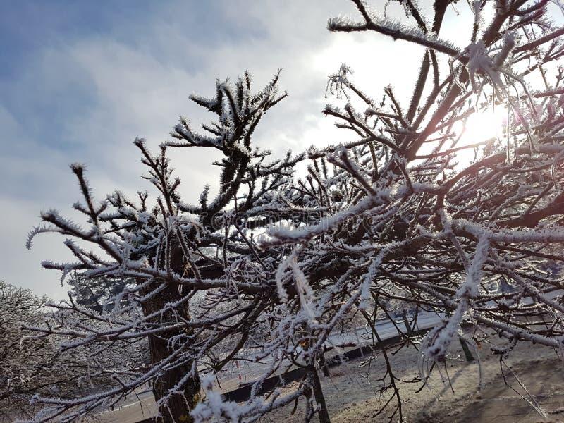 Winter kommt lizenzfreies stockfoto