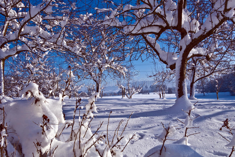 Winter at Lake Constance in 2014 stock images