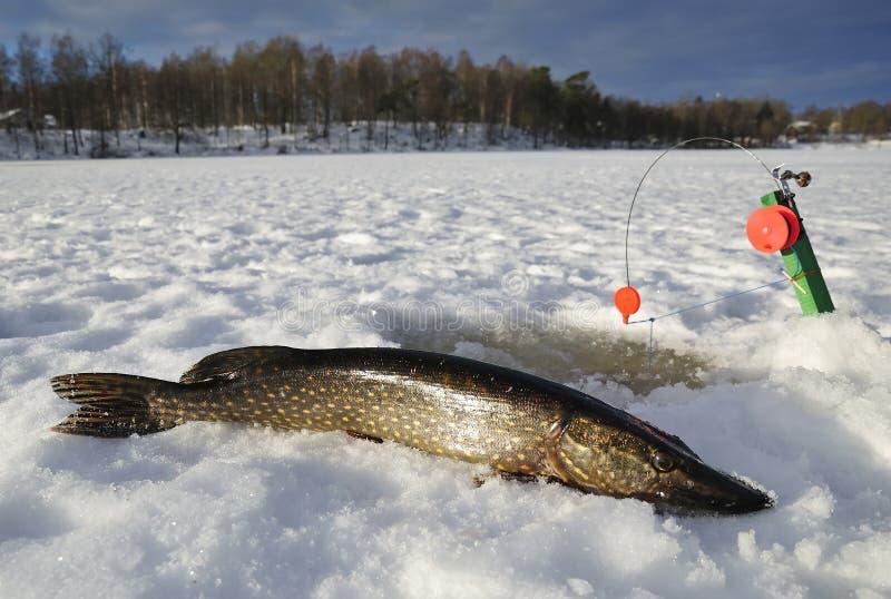 Winter Lake Fishing Royalty Free Stock Photo