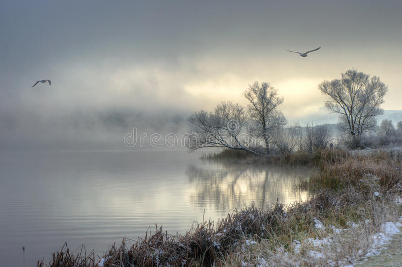 Winter lake with flying birds royalty free stock photography
