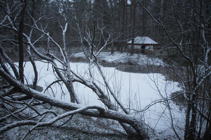 Winter lake. In the forest royalty free stock image