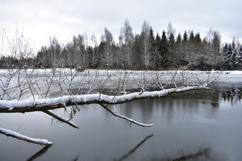 Winter lake, forest transformed unrecognizably, white feather bed of ice and snow entirely covers. The ground royalty free stock images