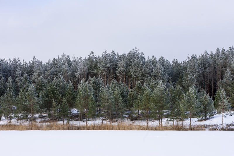 Winter in the lake. Icy cold forest. Frosty wood and ground. Freeze temperatures in nature. Snowy natural environment. royalty free stock image