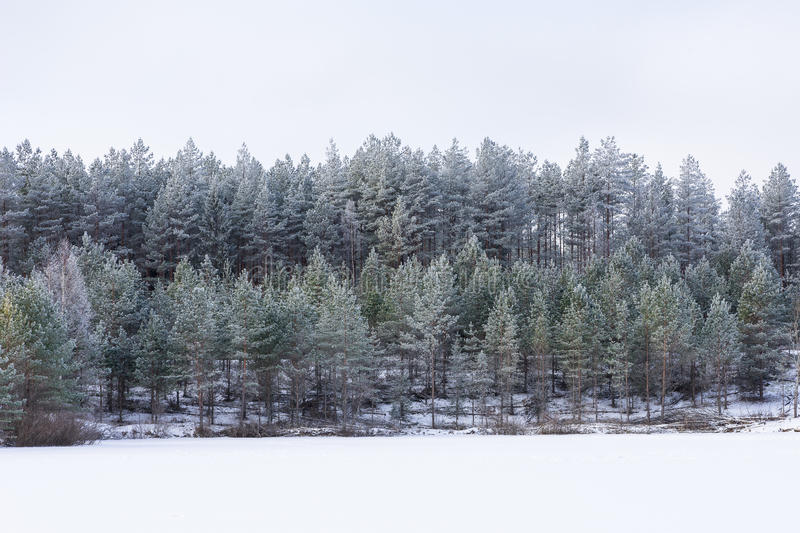 Winter in the lake. Icy cold forest. Frosty wood and ground. Freeze temperatures in nature. Snowy natural environment. Trees, snow and sky royalty free stock images