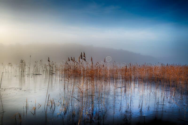 Winter lake in mist stock image