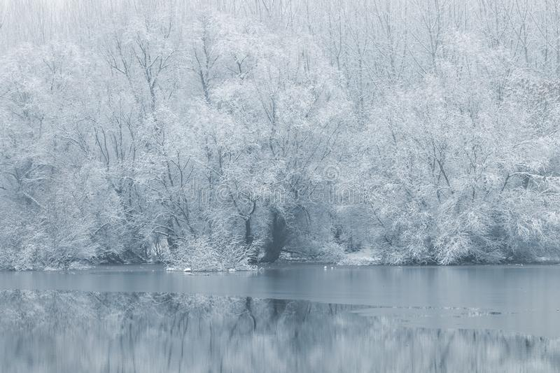 Winter lake scene reflecting in the water. Nature Background royalty free stock image