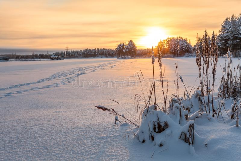 Winter lake shore under ice and snow at sunset light, footsteps on snowy surface. Northern Karelia, copy space stock image