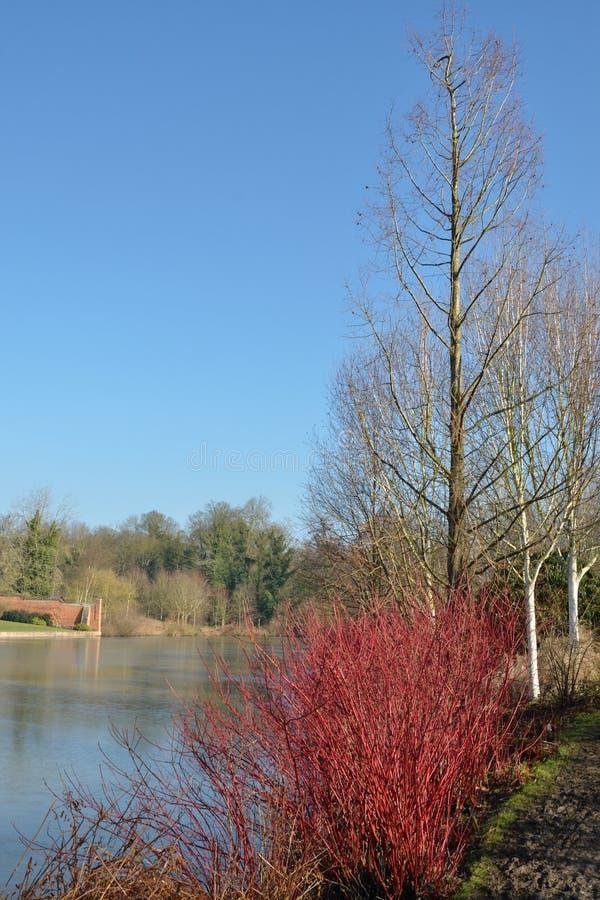 Free Winter Lake With Red Shrub Stock Photo - 29363420