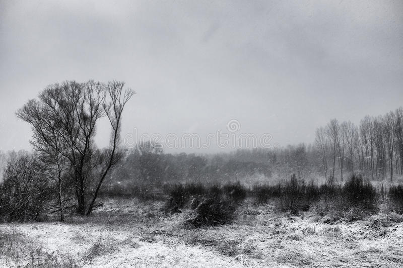 Winter landcape 1 royalty free stock photography
