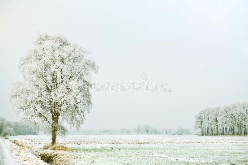 Download Winter Landscape Stock Images - Image: 10869684