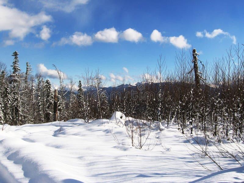 Download Winter landscape stock illustration. Image of outdoor - 1152469