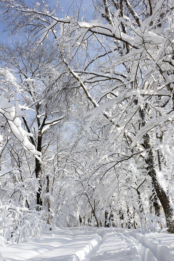Free Winter Landscape Stock Photo - 12195470