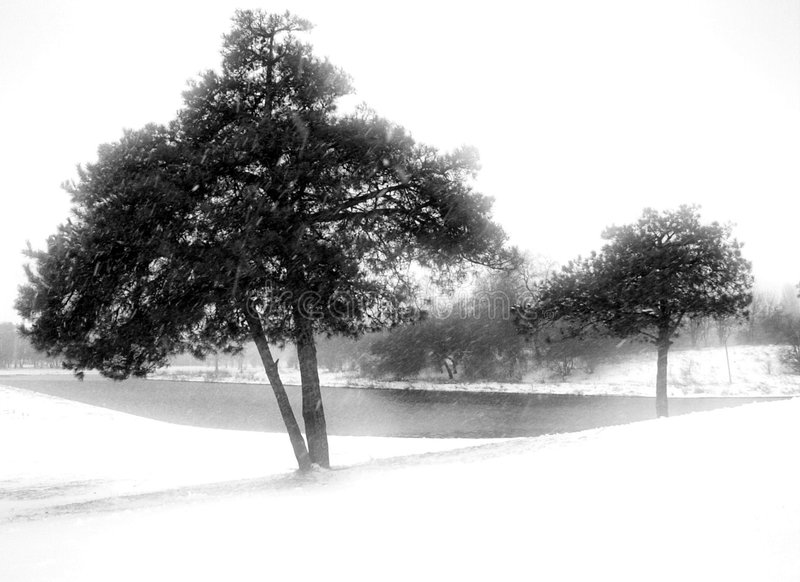 Winter landscape. Trees in the snow - blizzard, winter landscape royalty free stock image