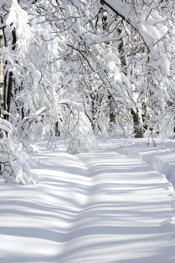 Free Winter Landscape Royalty Free Stock Photo - 12284295