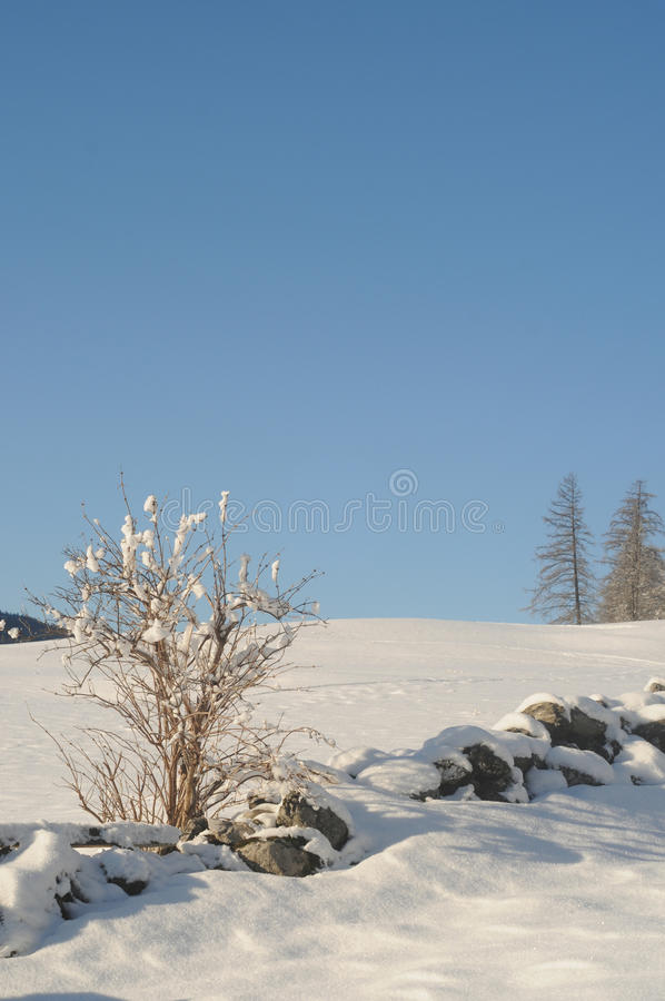 Winter landscape. In the swiss alps stock photography