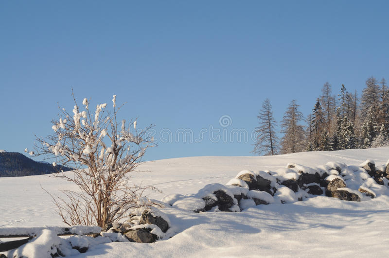 Winter landscape. In the swiss alps stock photo