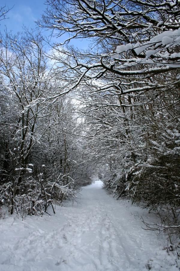 Winter-Landscape stock photo