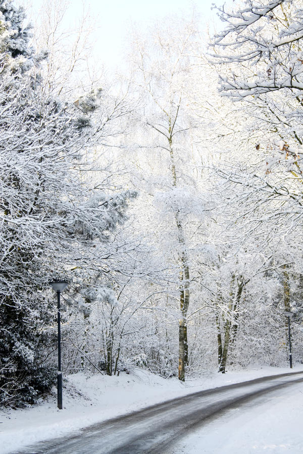 Winter landscape. With frosty trees and bushes royalty free stock photos