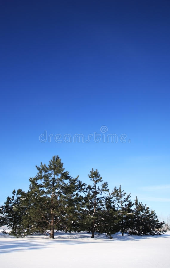 Download Winter landscape. stock photo. Image of snow, nature - 12749116