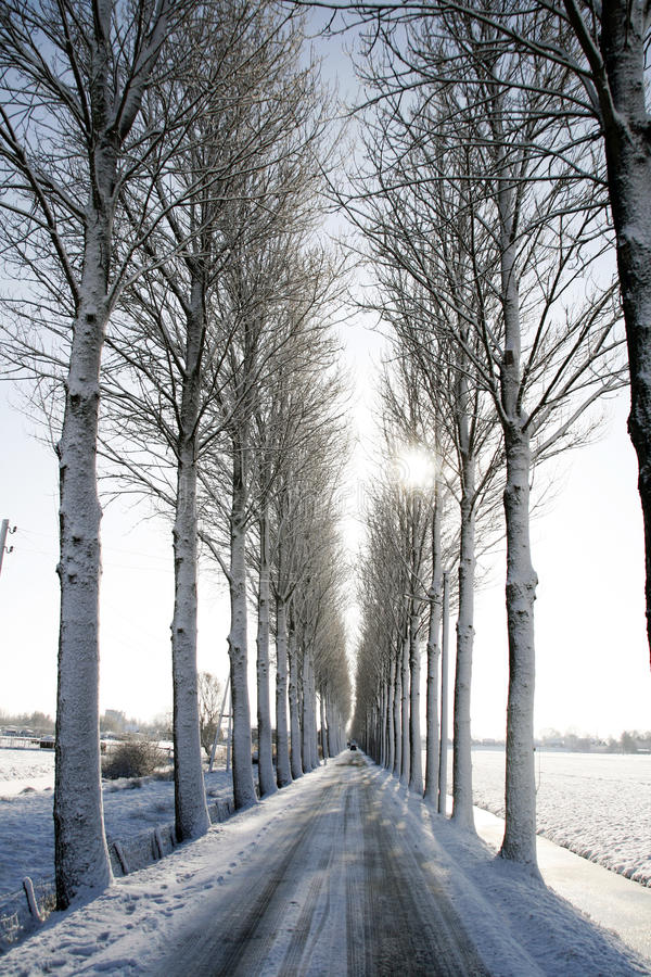 Download Winter landscape stock photo. Image of frozen, dutch - 12785776