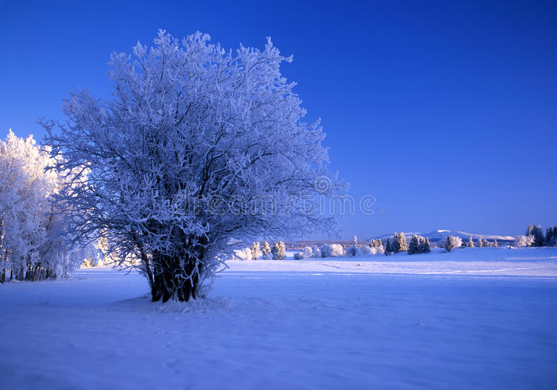 Download Winter landscape stock photo. Image of land, clear, freeze - 14362976