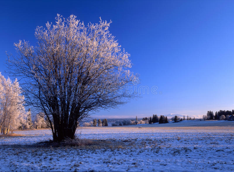 Download Winter landscape stock image. Image of cloudy, bright - 14386683