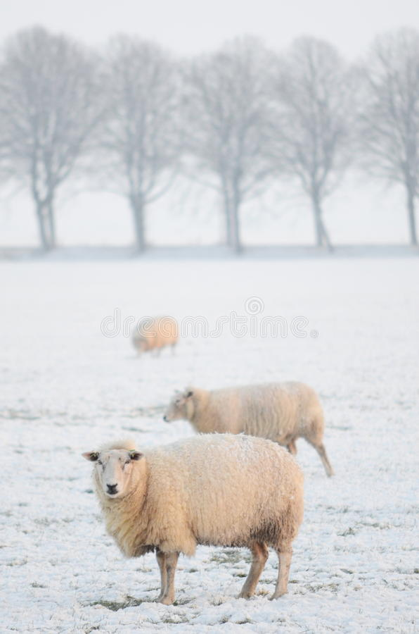 Download Winter landscape stock image. Image of cloud, ditch, growth - 17505891