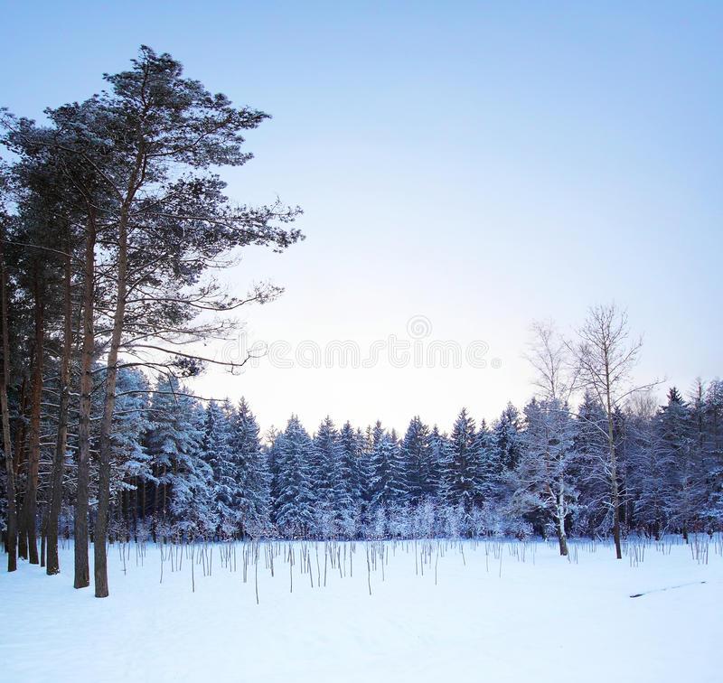 Free Winter Landscape Royalty Free Stock Images - 17998629