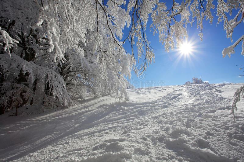 Download Winter Landscape Stock Photo - Image: 18269560