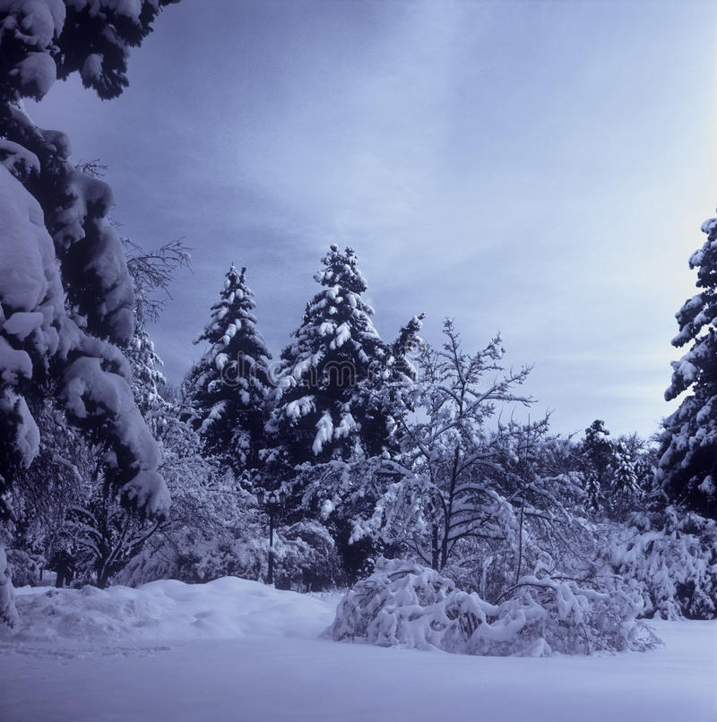 Download Winter landscape. stock image. Image of dark, mystery - 26924583