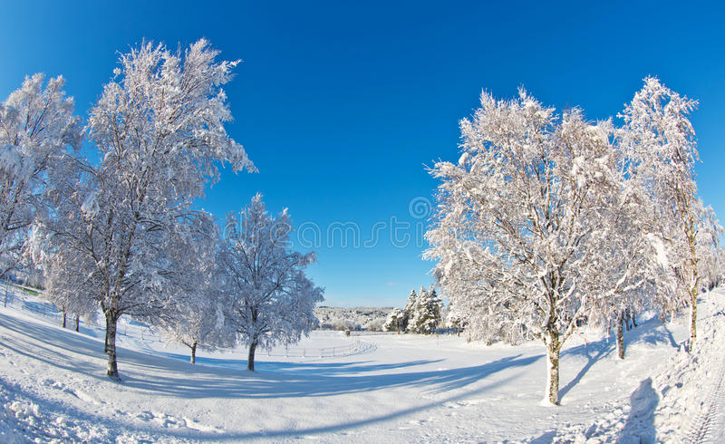 Winter landscape. With blue sky stock image