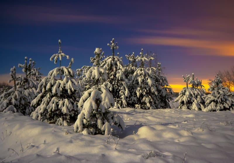 Download Winter Landscape stock photo. Image of evening, season - 28981232