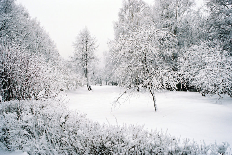 Download Winter landscape stock photo. Image of winter, white, traces - 324540