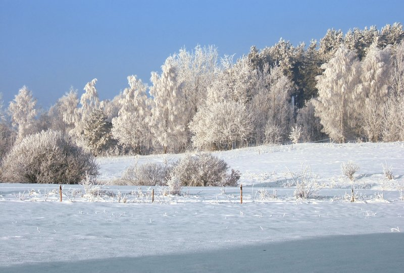 Download Winter landscape stock image. Image of snow, trees, blue - 471771