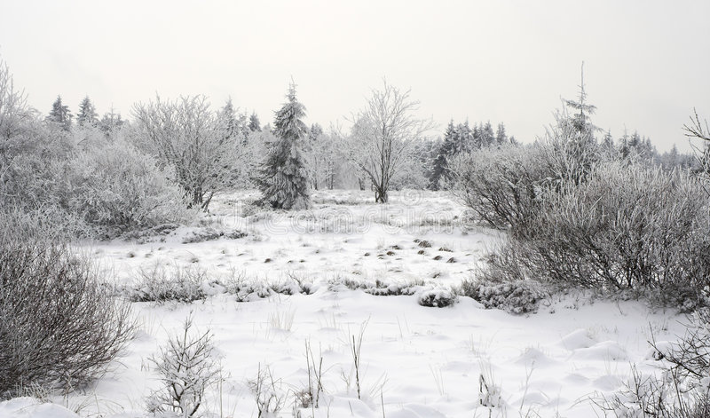 Download Winter landscape stock photo. Image of frost, hoarfrost - 547374