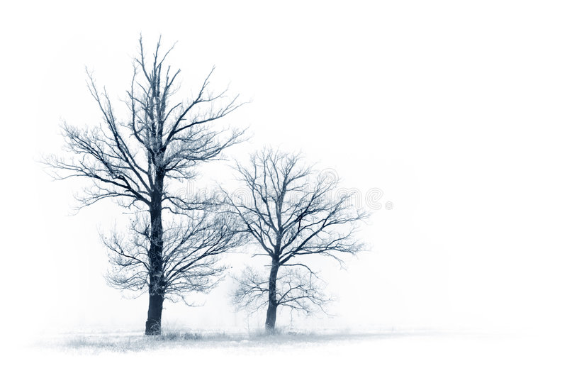 Download Winter landscape stock image. Image of december, space - 7700553