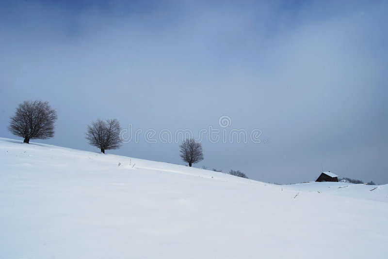 Winter landscape. Trees and house in winter on a background of blue sky stock images