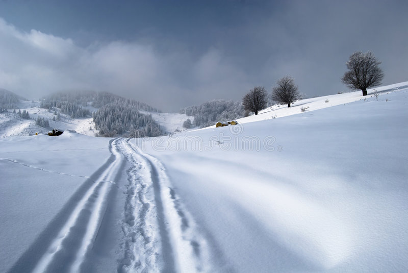 Winter landscape. Trees covered in snow; Traces in snow royalty free stock photos