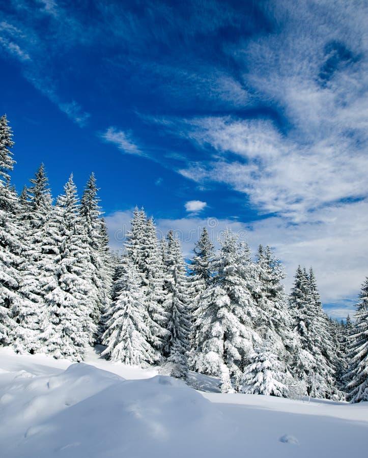 Free Winter Landscape Stock Photo - 8785710