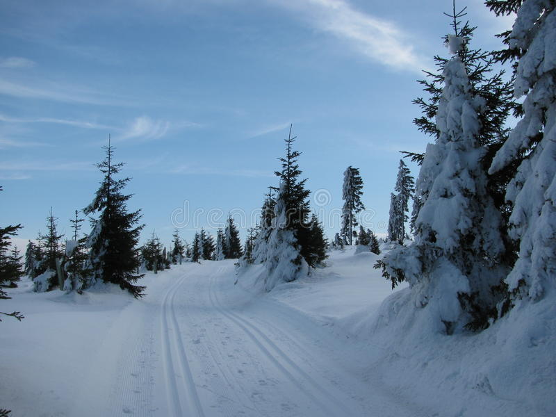 Winter landscape along the tracks for cross-country skiing royalty free stock photos