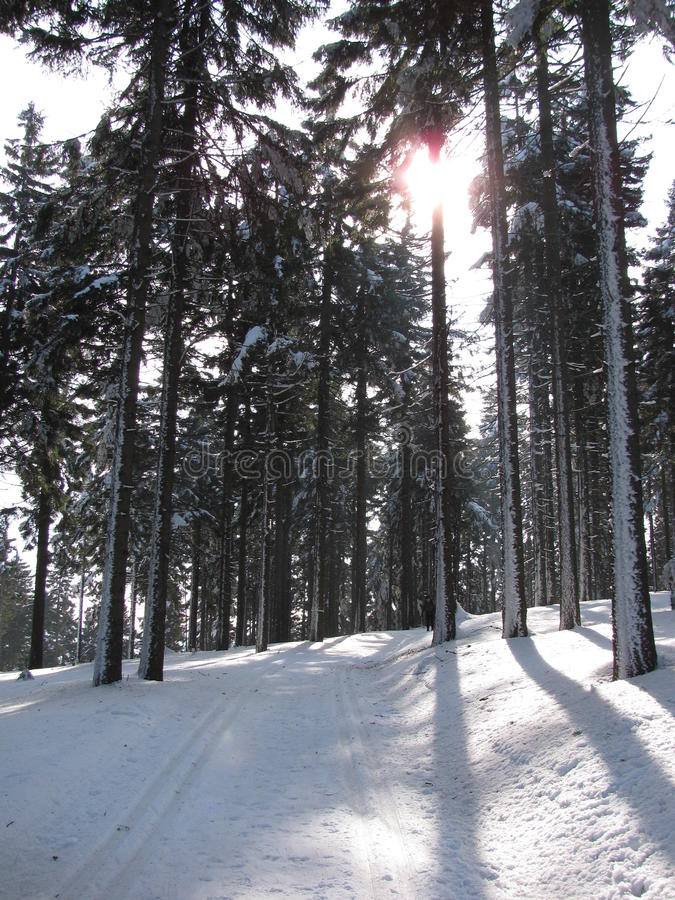Winter landscape along the tracks for cross-country skiing royalty free stock photography