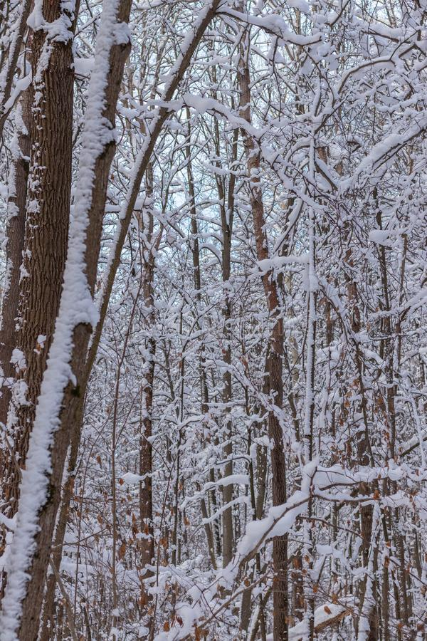 Winter landscape, background of snow-covered trees in the forest. Winter landscape. background of snow-covered trees in the forest stock photo